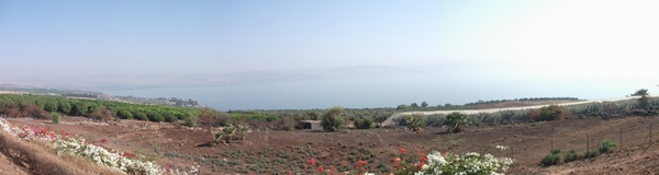 The view of the Sea of Galilee from the top of the Mount of Beatitudes. Sort of makes you want to sit down and say some things that will fundamentally altar the course of civilization, doesn't it?